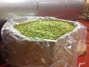 Wet nugget hops are overnighted to us large containers.